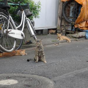 消えいく猫の穴 20210918