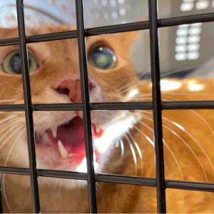 ベテラン子猫、居間の主となる 20210924
