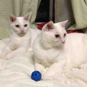 ベテラン子猫とシニア子猫 20190823