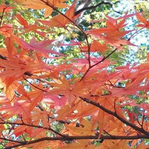 松永記念館(小田原)紅葉がちょうど見頃でした。