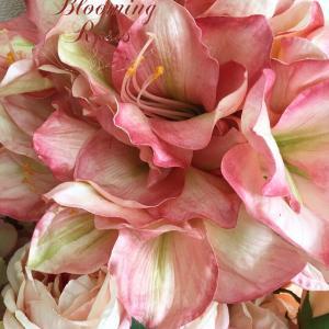美しいグラデーションピンクのアマリリスが入荷