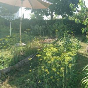 スウェーデンの庭に咲く草花7月後半編