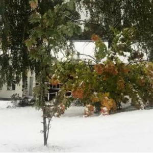 もう雪が降った、スウェーデン