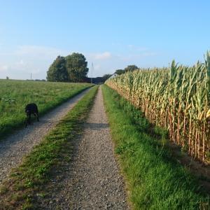 犬と散歩の風景 9月