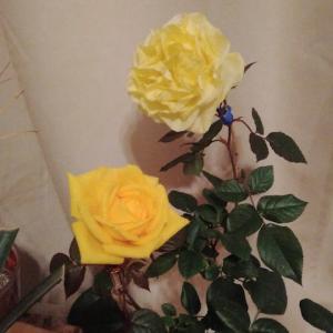 イイ感じの薔薇・その2