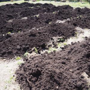 畑に黒土を搬入した どうなる?今年の家庭菜園
