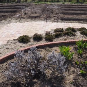 不要不急の外出を控えて家庭菜園をやるための畝をつくったら見えてきたもの