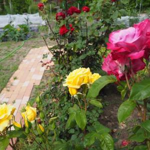 仕切るだけの手作り花壇の作り方 庭造りDIYは終わりのない趣味