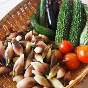 ミョウガの収穫のタイミングとコツ 育て方・食べ方・保存方法
