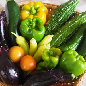 野菜を上手に冷凍保存すれば食費は節約できる