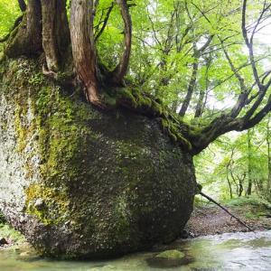 渓流の中の巨岩 秋田の穴場スポット【ネコバリ岩】に癒される