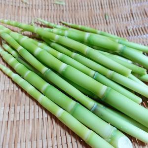 タケノコなのにアクが少なく茹でてすぐに食べられる根曲がり竹は今が旬