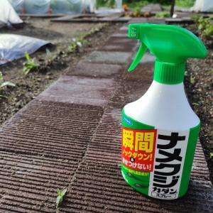 ナメクジ対策 家庭菜園の野菜被害が激減した