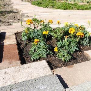 庭造りDIY 畑にインターロッキングを自分で施工した費用はいくら?