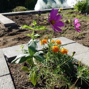 広すぎる雑然とした庭をスッキリとさせたいために庭造りDIYはまだまだ続く