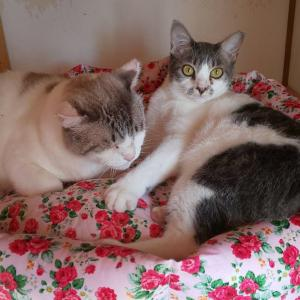 手作り猫ベッド