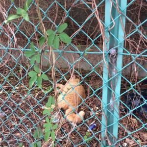 草むらに倒れていた猫その1