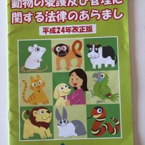 猫を捨てたら200万円の罰金