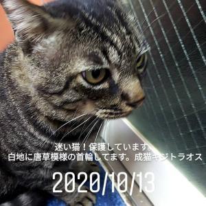 この猫の飼い主さんを探しています!