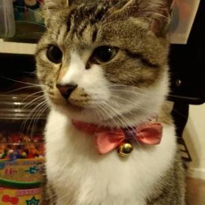 この猫を探しています。