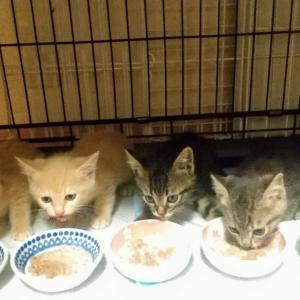 シャディ保護猫ハウス コロナ禍でも、不幸な子を救い続けたい!