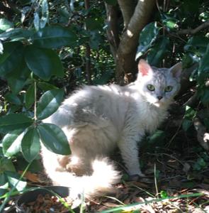 車の窓から投げ捨てられた猫の預かり、飼い主を探しています