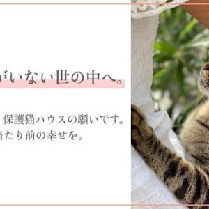 シャディ保護猫ハウスのクラウドファインディング、残り3日。