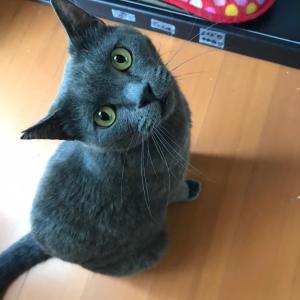 成猫の魅力