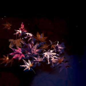 第950回   不動池の紅葉