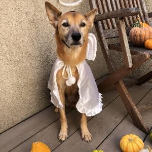 autumn means costume contest