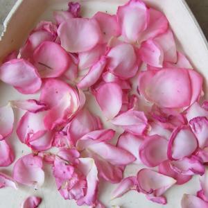庭のバラの香り
