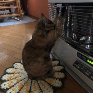 猫、ストーブに密着!