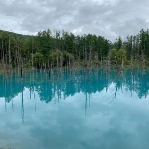青い池と四季彩の丘へ。