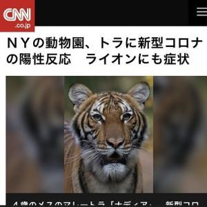 動物園のトラがコロナ陽性