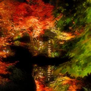 日光 逍遥園紅葉ライトアップ