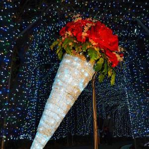 「おとなのイルミは超穴場」 茨城県フラワーパーク