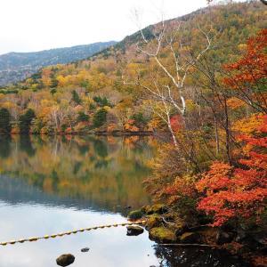 奥日光 紅葉狩り② 「錦秋の湯ノ湖とダンボー君」