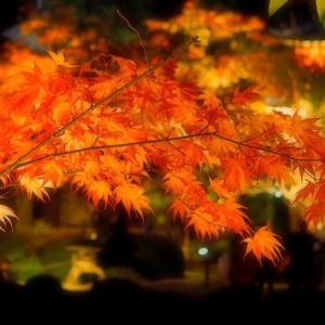 秋の奥日光 「穴場露天で紅葉風呂」 ペタ終了に思うこと。