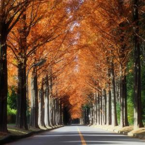 メタセコイア並木 「つくばキャンパス 闊歩してみた」
