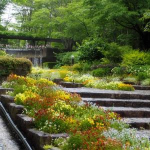 水戸市植物園 「雨の日のイングリッシュガーデン」