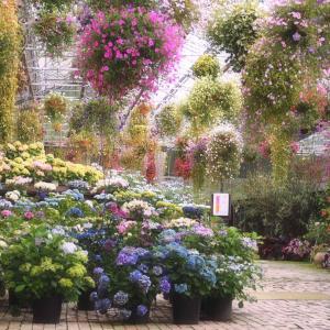 加茂荘花鳥園「宙に浮かぶ瑠璃色のアジサイ」