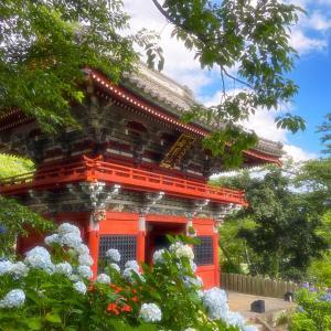 茨城のあじさい寺 雨引観音 「気になる開花状況は・・・」