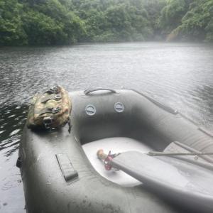 肌寒い雨が降る池で、、、。