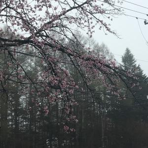 GW4日目、平成最後な軽井沢ランタン。。。