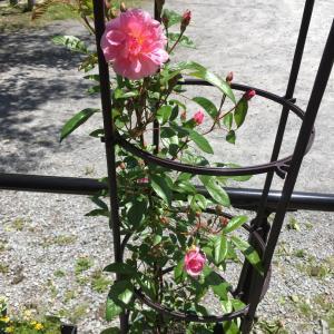 ばら、薔薇、バラなランタン。。。