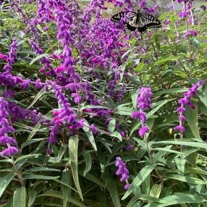 紫色の秋の花〜♪