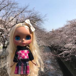 平成の桜、、見納めです♪