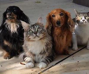 ペットの寿命をのばす方法発見!
