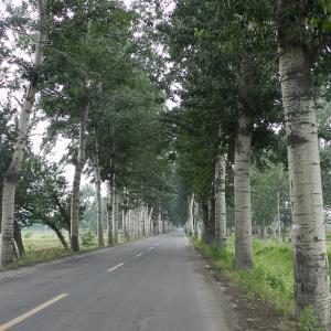 日本も中国も小さな街歩きが盛ん もっと地方へ訪日団も
