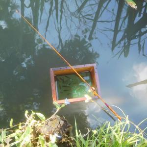 浮かし桶を作ってタナゴ釣り